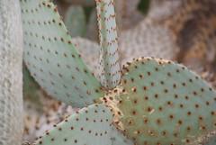 DSC09913 (larrylueck) Tags: domes flora cactus