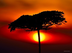 Nel Sole (Arcieri Saverio) Tags: natura nature natural macro nikon nikkor red rouge rosso passion redpassion sole sky stillife travel tramonto sunrise sunset flowers fiore naturaleza light siluette