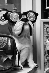 ... (Anna Karolina Ozola) Tags: dog figurine goggles funny vintage