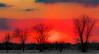 Union des couleurs entre la terre et le ciel - Union of colors between the earth and the sky. (MichelGuérin) Tags: 2018 canada exterior extérieur hiver lightroomcc michelguérin nature neige nikon nikonafsnikkor200500mmf56eedvr nikond500 qc québec soleil sun sunset arbres snow tree saintcuthbert ca