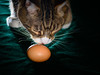 egg & Oscar (grahamrobb888) Tags: nikon nikond800 nikkor d800 afnikkor80200mm128ed oscar cat pet egg green curiousity