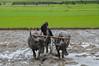 DSC_0036 (Amdadulh) Tags: outdoor nikond3200 photography photo people farmer cultivation