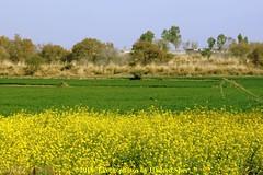 Colors of Punjab (C@MARADERIE) Tags: colors must punjab colorsofpunjab spectrum colorful horizontal attock punjabdayrung pakistan