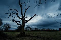 Haunted tree (dusk_rider) Tags: dead haunted countryside england english hertfordshire great wymondley nikon d7200 nikkor 1224mm f4
