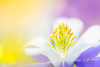 Blooming (Jas Bassi) Tags: jasbassi jasbassiphotography nikon105mm nikond800e nikon close up macrophotography macroflower macrolens macroworld flowerphoto flower photography flowerphotography