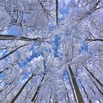 Winter Buchenwald thumbnail