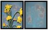 Daffodil lumen print diptych (julesnene) Tags: california flower juliasumangil kodakultraiii sunprint alternativephotography backyard bouquet diptych flora julesnene lumen lumenart nature photogram withoutalens
