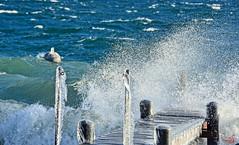 L'âge de glace... (Diegojack) Tags: saintprex vaud hiver froid neige glace embrune vagues bises eau gouttes