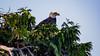 Bald Eagle, Tofino (Yuliksroas) Tags: tofino bald eagle canada vancouver island 150 national parks bird british columbia animal planet