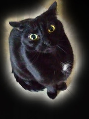 ...sigh... (sheila swindell) Tags: cat anger pet disappointment emotion funny