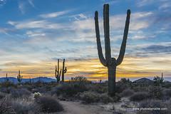 Another desert Sunrise (doveoggi) Tags: 8626 scottsdale arizona mcdowellsonoranpreserve desert sunrise saguaro trail