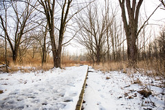 Life in Winter (Lauren Delgado) Tags: winter akron ohio wintertime life firestone metro park metropark golden hour landscape photography canon 6d snow cold ice sunset hiking trails explore discover summit county walkway platform