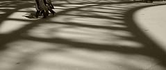 l'ombre de la tour... (paninho) Tags: toureiffel paris france blackwhite noiretblanc pretoebranco personnes ombres