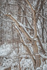 dead silence (jimmy_racoon) Tags: 70200 f4l is canon 5d mk2 nature silence winter woods 70200f4lis canon5dmk2
