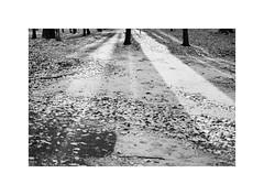 25. Morning light (kotmariusz) Tags: park światło monochrom bw polska świdnica zima śnieg analog ilfordxp2 olympusom40 poland winter snow light trees minimal 35mm filmphotography