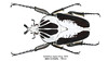 Goliathus regius Klug, 1835 (Easyparadise) Tags: insect entmology cetoniinae goliathus beetle collection museum nature macro specimen hobby animal africa scarab 昆虫 甲虫