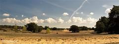 Wekeromse Zand (jandewit2) Tags: wekeromse zand nederland netherlands natuur veluwe landschap landscape