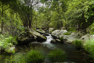 Curso río Arbillas