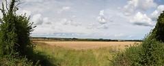 Reprise (Worthing Wanderer) Tags: norfolk summer sunny farmland coast seaside nelson holkham burnham hero august