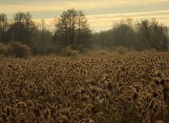 just landscape (stempel*) Tags: polska poland polen polonia gambezia pentax k30 bigma landscape nature
