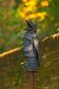 Stiftspark Die Raben (fotofrysk) Tags: art sculpture dieraben byartistingridkraloven abbeystiftspark easterneuropetrip melk austria oesterreich afsnikkor703004556g nikond7100 20109288776