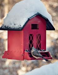 ~ A Little Bird, At The Red Bird House .... (~ Cindy~) Tags: redbirdhouse house littlebird enjoyingthelittlethings snow rockwood tn 2018 titmouse