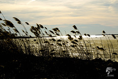IMG_0040 (Sickbones_photography) Tags: beach ocean seaside nj newjersey blackwhite color sand water dream arcade
