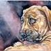 BoerBoel Puppy-Schmincke Watercolor on Hahnemühle Watercolor Postcard