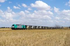 Recuerdos del último verano (Trenesmirobriga) Tags: tren trenes salamanca megacombi 335 locomotora mercancías calzada de don diego robliza cojos