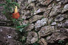 IMG_4154 (noemislee) Tags: peru cusco diciembre december 2017 noemi slee noemislee noemí tatiana vanessa ximena sánchez mendoza machu picchu perú world wonder seven green ancient history rocks rocas flower beauty