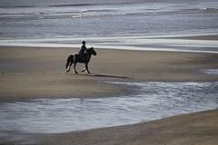 Horse (Paul McNamara) Tags: horse donabate beach rider dublin ireland irishsea water sand shore shadow