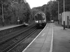 Rowlands Castle Train Station (LaurenTownsend'sPhotography) Tags: train swr rowlandscastle station bw