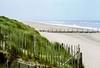 The Norfolk coast at Horsey, 8th August 1992 (Linda 2409) Tags: beach sand coast windy groyne