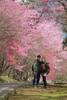 DSCF4222 (wii025) Tags: fujifilm 武陵農場 xt2 xf50140