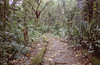 Sa Mga Puno, Palawan 2017 (Sly Panda) Tags: sly panda 35mm yashica zeiss tessar f35 trees woods wildlife rescue sanctuary jungle philipines palawan