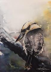 Bandit (Jennifer Kraska) Tags: jennifer jenniferkraska kraska kookaburra watercolor art