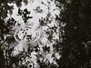 pond (_tess_) Tags: marokko المغربalmaghrib tess reflection reflex bouknadel