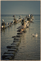 Seagulls and ducks (Heinze Detlef) Tags: bansin seebäder mecklenburg usedom vögel enten möwen seaglls ducks wasser ostsee urlaub urlauber horizont wellenbrecher vogelkolonie himmel natur urlaubsfoto