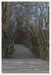 Padernello, il ponte di San Vigilio (Outlaw Pete 65) Tags: ponte bridge legno wood arte art natura nature arteinnatura giulianomauri nikond600 nikkor24120mm padernello lombardia italia