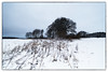 From Evje Golf Course/Winter (In Explore) (Eline Lyng) Tags: nature winter snow straws norway leica s 007 leicas mediumformat superelmars24mm evjegolfcourse evjegolfbane wideangle