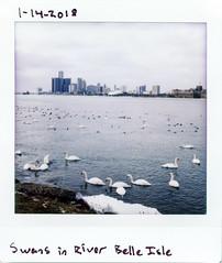 instaxsq-003 (elsuperbob) Tags: lomography lomoinstantsquare instaxsquare instantfilm detroit michigan swans detroitriver belleisle