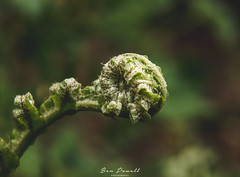 Curls and Coils (Ben Powell Photo) Tags: macro eden project cornwall par bodmin staustell plants flowers leaf leaves nikon d750 photographer photography fleur upclose close up closeup beautiful colourful colours depth field nature natural wildlife blossom fern woodland woods forest