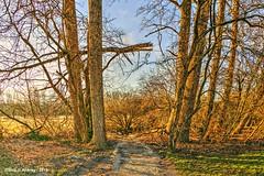 Groninger Landschap,Groningen,the Netherlands,Europe (Aheroy) Tags: aheroy aheroyal groningen bomen boom landscape landschap groningerlandschap road weg struik bush pad paadje path tak takken branch branches