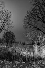 Eiskalte Idylle (M-Z-Photo) Tags: colmberg bayern deutschland de nachtaufnahme schwarzweis monochrome langzeitbelichtung winter schnee weiher see bäume