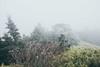_MG_3757 (waychen_C) Tags: nantou renai renaitownship hehuanshan hehuanmountain fog mist now taiwan 台灣 南投 仁愛 仁愛鄉 合歡山 wuling 武嶺