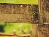 #Sitio #Natureza #Cerca ❤📷 (cintiapotenza) Tags: cerca sitio natureza
