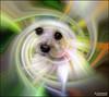 Twirling My Buster... (angelakanner) Tags: canon70d longisland pet dog cute twirl