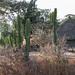 IMG_5203 Ethiopia