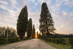 Cipressi (gianKE) Tags: stazzema italia