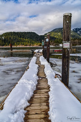 Pitt Lake/ Grant Narrows Regional Park (SonjaPetersonPh♡tography) Tags: pittmeadows pittlake pittriver snow winter 2018 nikon nikond5300 grantnarrowsregionalpark regionalpark park clouds water river lake boats marina floatingwharf nature trees dyke trail mountains landscape marsh marshland waterfowl wildlife ice bc bcparks britishcolumbia canada